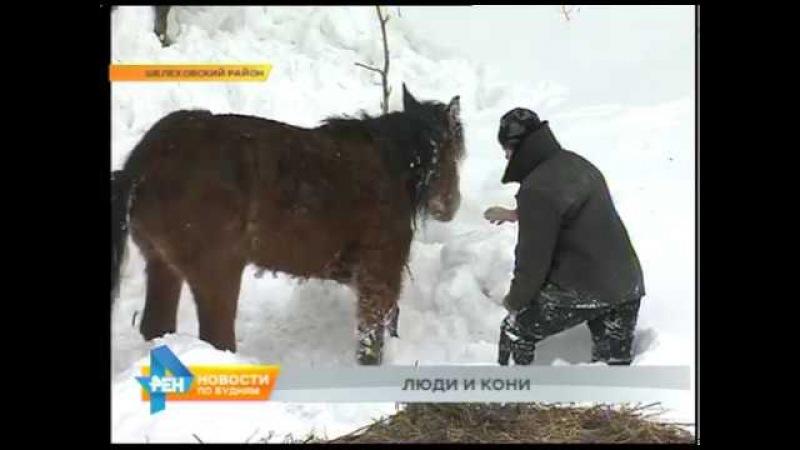 ДТП с фурой, которая везла табун лошадей, возле Шелехова животным требуется помощь