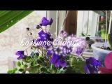 Орхидея Ваниль, Спасаем орхидею и не много о фиалочках ?