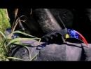 Керамбит Голубая сталь Мраморный градиент Фальшион Зуб тигра