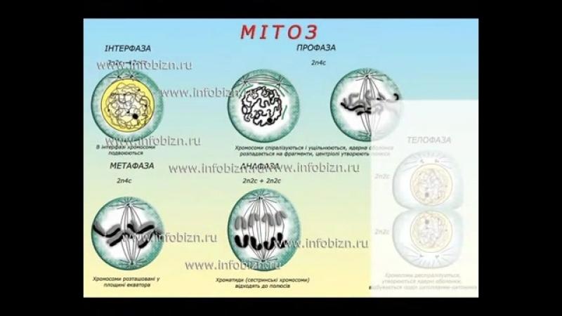 Біологія українською мовою, плакати для широкоформатного друку