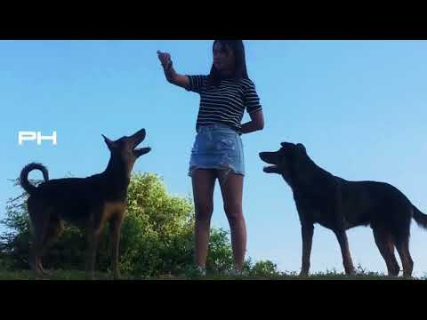 DTQ Wow Cute Girl meeting funny Dogs At Home Training Smart Dogs in Village Part 5