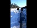Собака Алиса на прогулке
