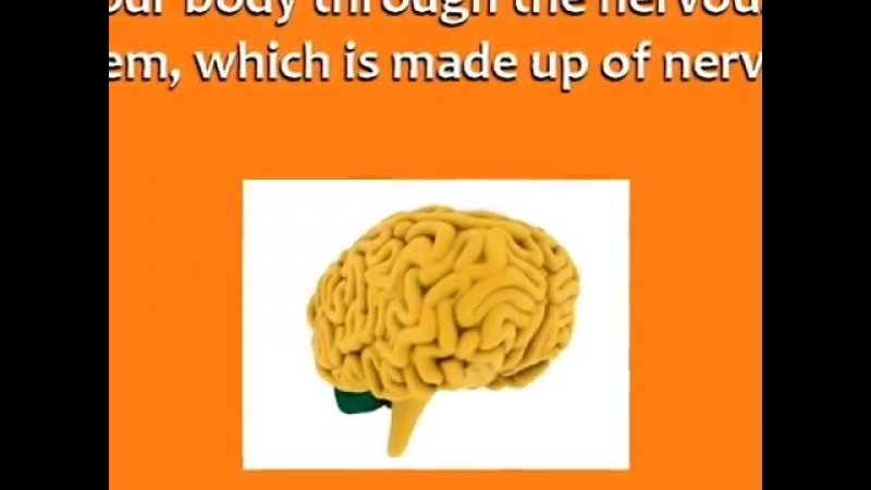 Inside The Human Body - English Vocabulary Words - Scientific Material - Cool Biology For Students -