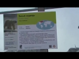 Polar Bear in Moscow Zoo. LGBT TRAVELS  Copyright.