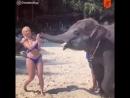 Блондинка и слонёнок