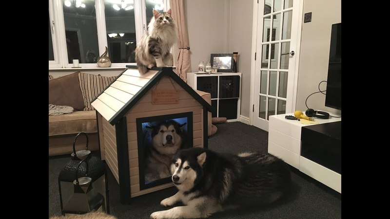 Niko's first dog house.