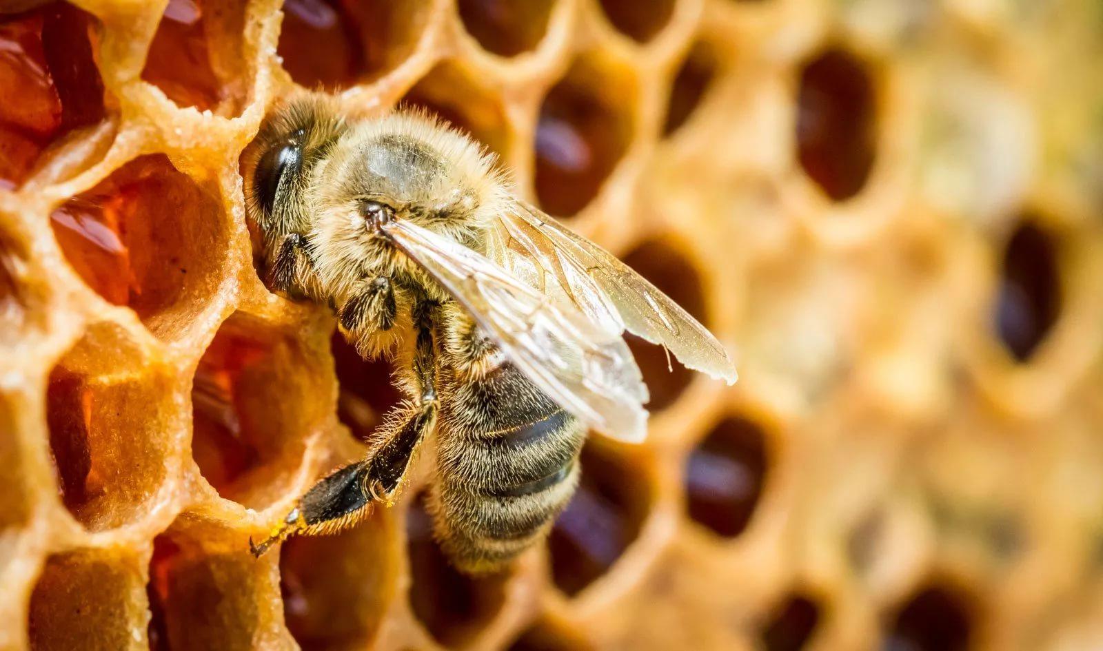 Свойства дикого мёда