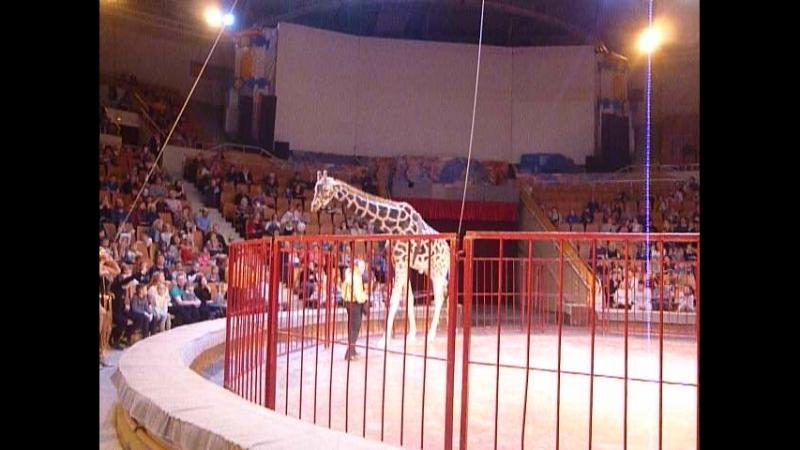 Жираф шоу