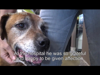 Senior dog abandoned by his family and lived on the streets alone for a year