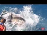 Большая белая акула сломала клетку с дайвером внутри!