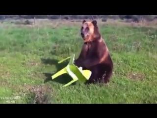 Что эти русские себе позволяют? Медведей дрессируют дома!