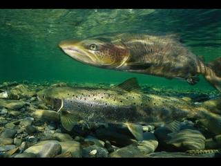 Рыбный суп Энергия моря