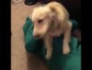 Парень сделал живую копию любимой игрушки своей собаки