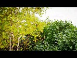 Bahroma - На семи холмах (Бахрома)