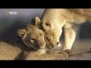 Животный мир Африки. Дикие животные. Документальный фильм