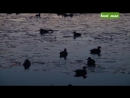 Охота на утку в декабре