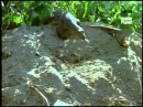 Хитрый полосатый варан