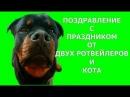 ДВА РОТВЕЙЛЕРА И КОТ ПОЗДРАВЛЯЮТ ЛАРОЧКУ С 8 МАРТА воспитание и дрессировка собак