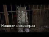 Новости о вольерах / Рыси кушают крыс