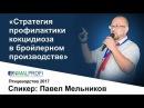 ANIMALPROFI. Август 2017. Павел Мельников: Стратегия профилактики кокцидиоза в бройлерном произво