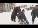 Медведи помогли своему дрессировщику и другу встать на ноги после травмы