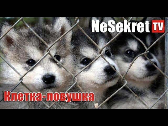 Клетка - Ловушка для собак и кошек своими руками. Город Улан-Удэ
