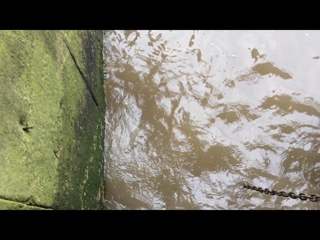 Lolina - The River