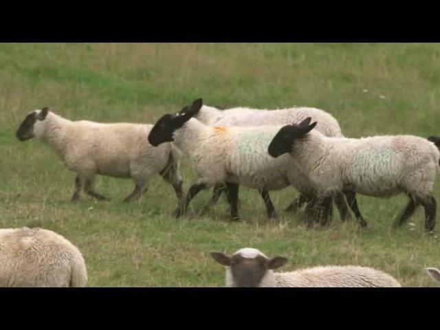 BBC Tudor Monastery Farm 6of6