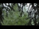 Relaxing Sound of Rain and Wind in Forest 1 Hour Rain Drops Falling From Trees with Wind