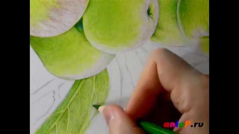 Рисуем зеленые яблоки цветными карандашами. Часть 5