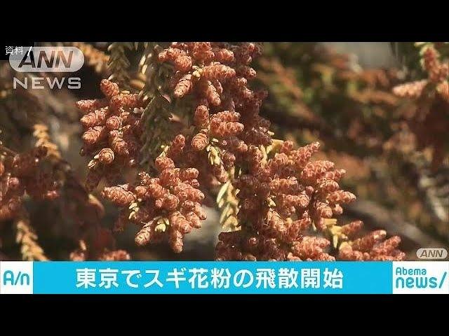 14日からスギ花粉飛散 例年より2日早く 都が発表(18/02/16)