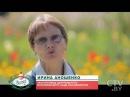 «Осенние цветы: хризантемы»: история цветка, как его растить и чем лечить