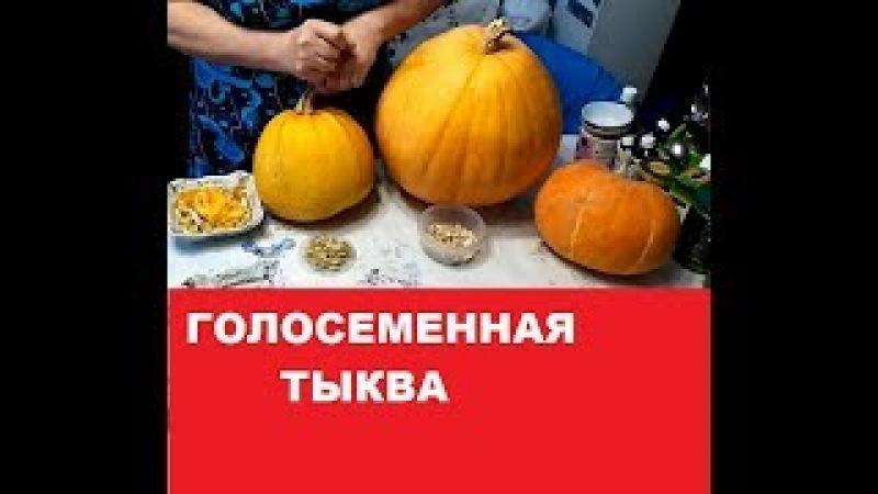 ГОЛОСЕМЕННАЯ ТЫКВА.