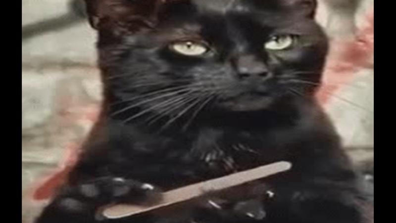 Лучшие Новые Приколы от ЧЕРНОГО КОТА! The best New Gags from the BLACK CAT!