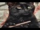 Лучшие Новые Приколы от ЧЕРНОГО КОТА The best New Gags from the BLACK CAT