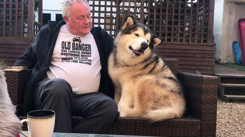 Alaskan malamutes weekend with the granparents