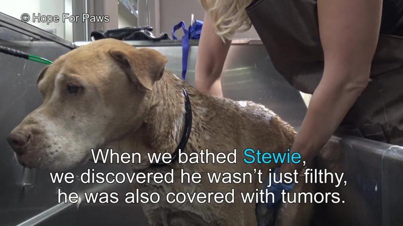 Переезжая, люди бросили своего пса. Животное было так голодно, что ело даже камни
