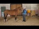 Красавец Палтус на Калгановском конном заводе
