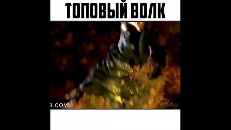топовый волчара