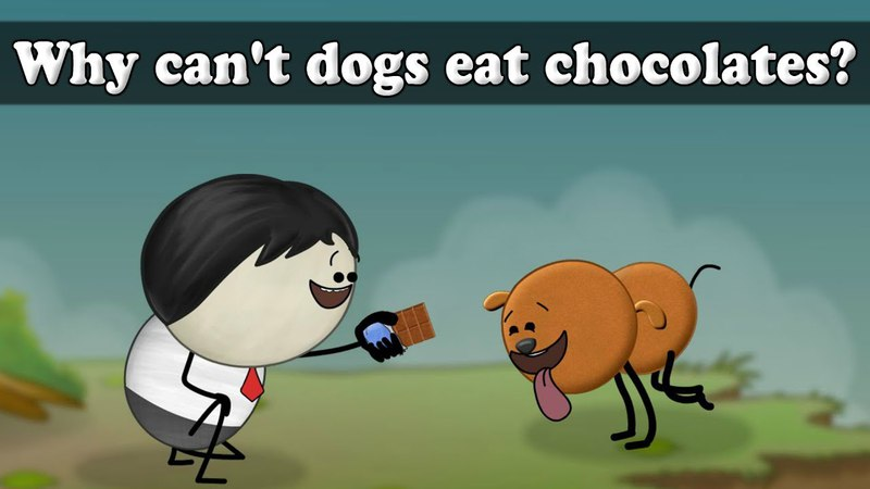 Why can't dogs eat chocolates? | Smart Learning for All