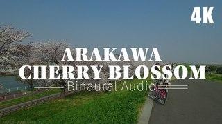 荒川の桜『立体音響』Cherry Blossom at Arakawa - 4K | Binaural Audio【ASMR】