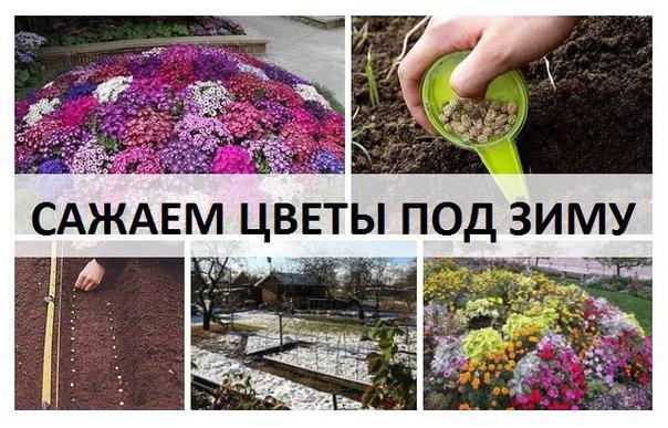 В какой день лучше всего сажать цветы 661