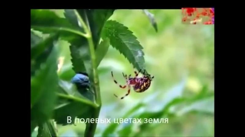 Юрий Антонов У берез и сосен лирика
