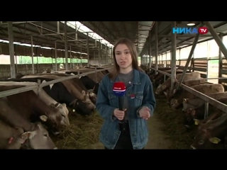 Новости НИКА ТВ