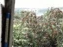 10 июль 2008 йур йуреш вишня 2 video138772802 456239702