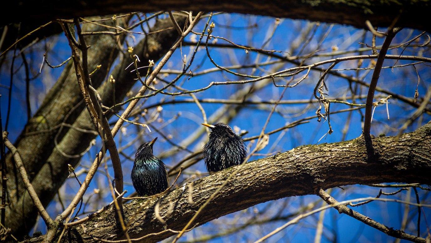 Птицы вестники весны картинки для детей