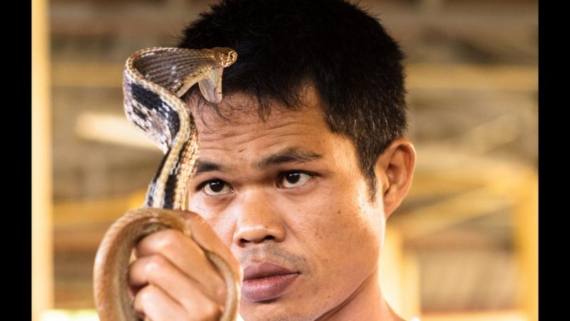 Шоу ядовитых змей