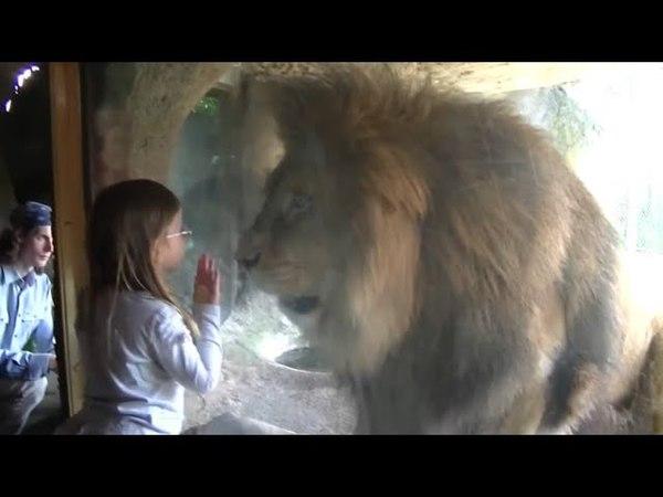 животные в вольерах нападают 🐒🐯🦁 Animals in enclosures attack 🐒🐯🦁 [Artem P]