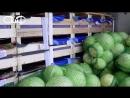 Попытку незаконного перемещения крупной партии плодоовощной продукции пресекли сотрудники Витебской таможни