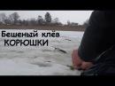 Один день на зимней рыбалке. Бешеный клёв КОРЮШКИ